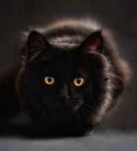 Shadow the PR Cat - Alexis Chateau PR.jpg