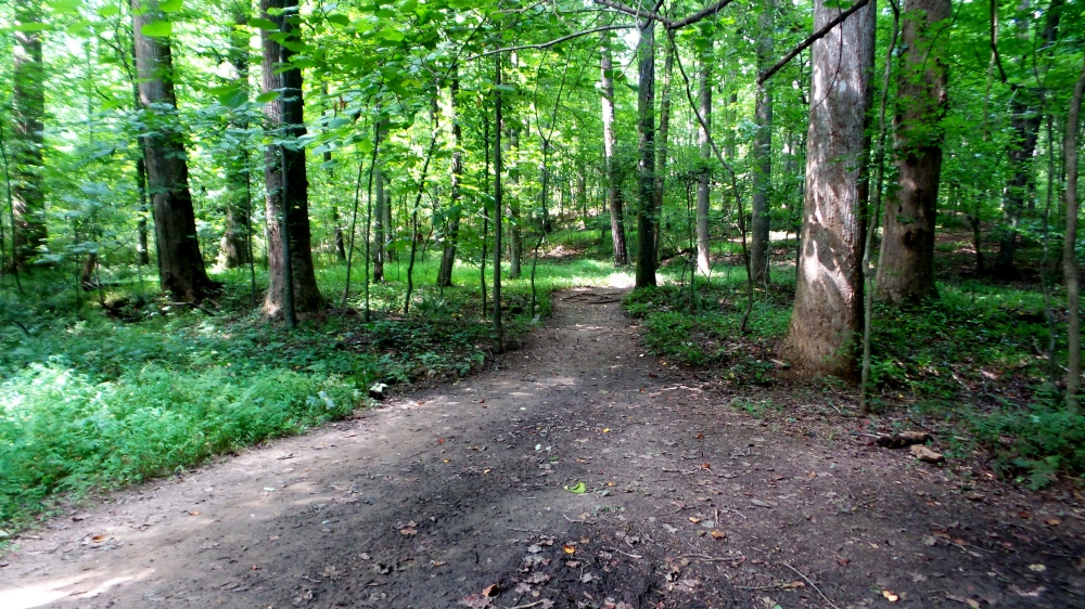 2 Reynolds Nature Preserve Hiking Trails.jpg