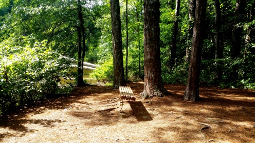 8 Reynolds Nature Preserve Seating